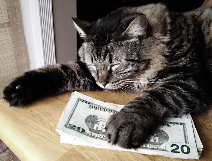 fat-cat-cash_result