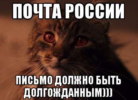 koshka-filcha_27063990_orig_